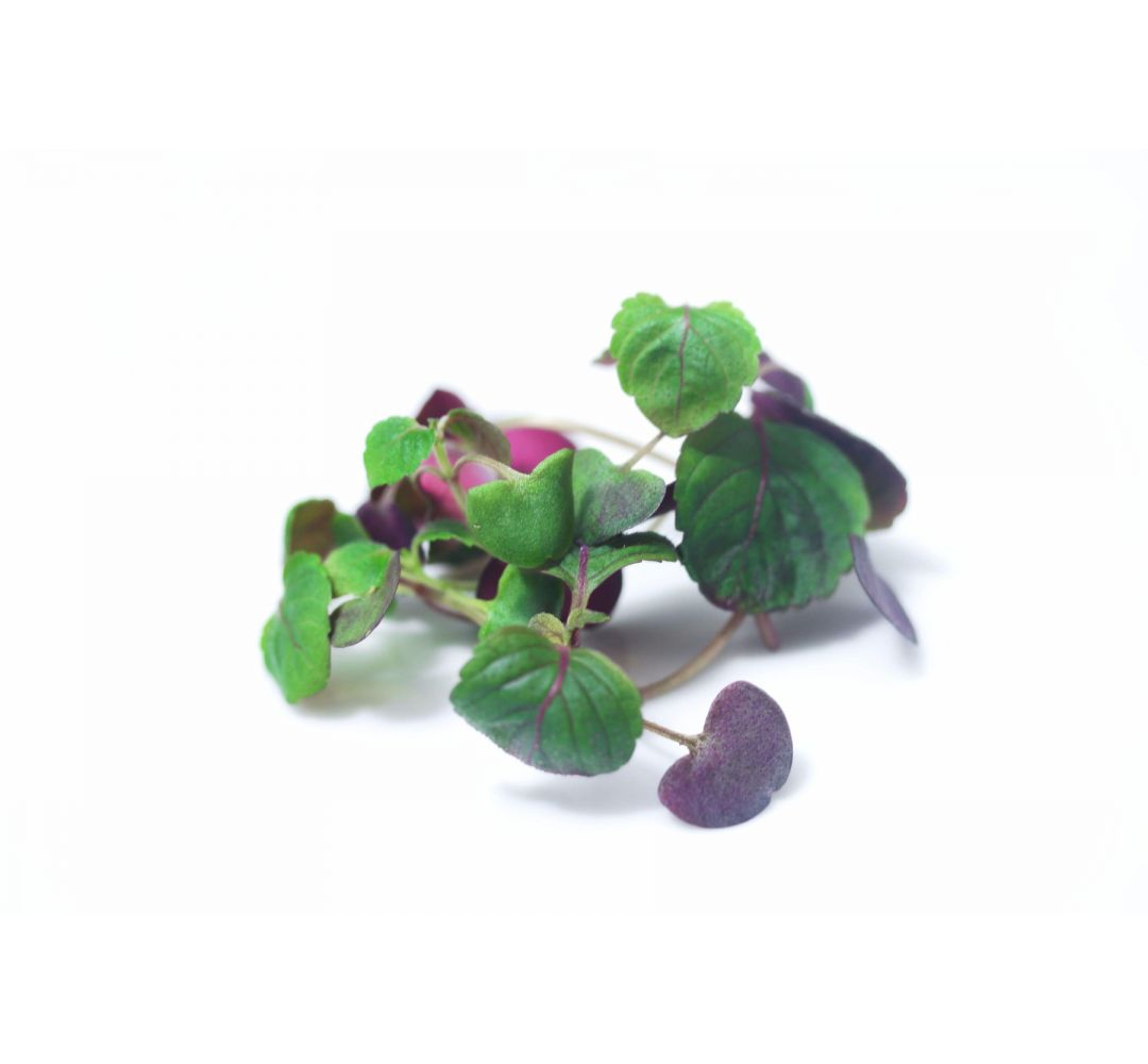 Shiso (rouge)